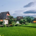 Villas in green rice fields (1)