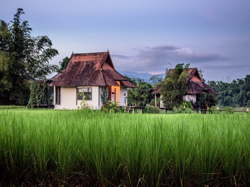Villas in green rice fields (3)